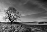 Tree BW.jpg