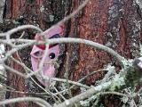 2nd January 2006 Pink Bull !!