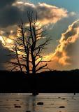 7th January, Tree