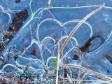 Iced Hearts.jpg