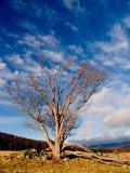 30th January Blue sky