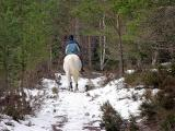 14th March Horse in the Woods