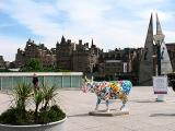 Edinburgh cow