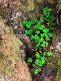 Natures Plant Pot