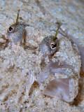 Flounder - Oh