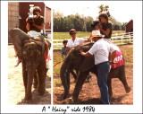 elephant.ride.1984.jpg