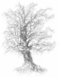 Wk2-Tree-Snap-It.jpg