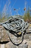 Rope Wall (2)