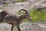 Badlands National Park---June 2010