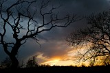 Leica Forum Challenge 15:Tree