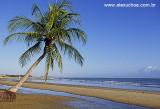 Coqueiro na praia das fleixeiras.jpg