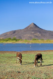 Pico do Cabugi, Lages, Rio Grande do Norte 0339.jpg