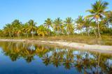 reflexo do coqueiral em Maraú