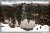Reflection in a small pond