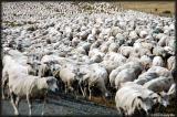 Massive migration