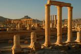 Columns - Palmyra