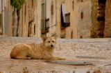 Dog - Caracena