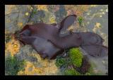kelp_and_seaweed