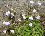 Tiny, tiny little flowers