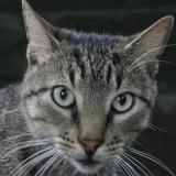 Kia the Reception Cat