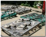 Shark Fins for Sale
