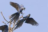 Birds of America's