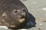 Mammals Subantarctic New Zealand