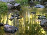 Aspen Reflection