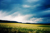 Oil Seed Crop, Storm-lit
