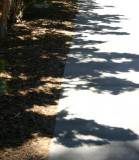 Shrubbery Shadows