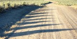 Sagebrush Shadows, Late Afternoon