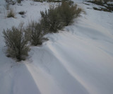 Sagebrush and Blown Snow