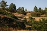Ponderosa Forest and Grassland