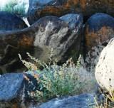 Boulders at Caldron's Edge