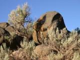Sagebrush and Basalt Above the Edge