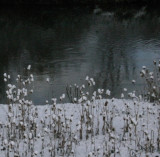 Teasels, Portneuf River