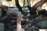 Branches in the pick-up