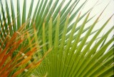 Fronds in Ethel M's Garden