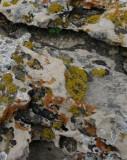 Lichens on rock outcrop at a Lewis & Clark interpretive site