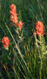 Paintbrush Greets Sunrise