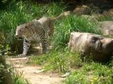 Safari 2009: Animals