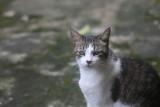 Billie Cat