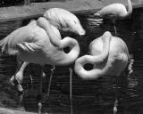 Flamingos 6.jpg