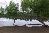Lake with Tree 2.jpg
