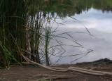 Lake with Reeds 2.jpg