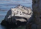 Bird Rocks - 1.jpg