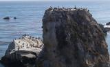 Bird Rocks - 2.jpg