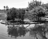 Pond Landscape .jpg