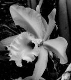 Orchid .jpg