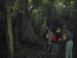 Forest path at Bobiri Reserve, Ghana